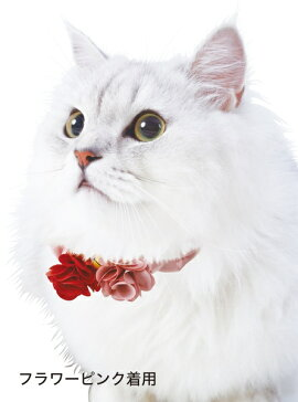 ペティオプレシャンテキャットカラーシュシュフラワーパープル猫用首輪平首輪カラー繊維猫全猫種短毛猫長毛猫Petio