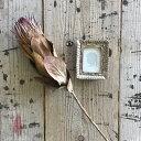 【単品ドライフラワー】【プロテア1本】単品ドライフラワー、花材、花資材、壁掛け、玄関に!インスタ映え!ばら売り…