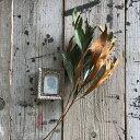 【単品ドライフラワー】【グレビレアゴールド2本】単品ドライフラワー、花材、花資材、壁掛け、玄関に!インスタ映え…