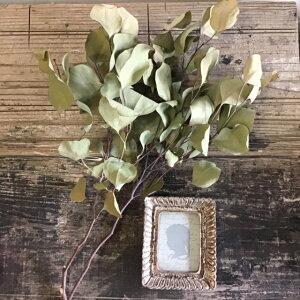 【単品ドライフラワー】【ユーカリポポラス 2〜3本】単品ドライフラワー、花材、花資材、壁掛け、玄関に!インスタ映え!ばら売りドライフラワー、