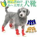 【犬の散歩用】雨や雪の日に!ドッグブーツ・レインシューズのおすすめは?