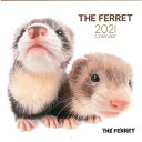 Artlist Collection THE FERRET 2021フェレットカレンダー カレンダー フェレット アーリスト カレンダー2021 壁掛け …