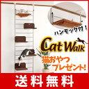 Cat_walk