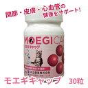 Moegicap 2