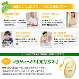 ファイテン桑葉青汁発芽玄米プラスお徳用(phiten)