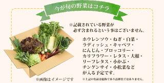 旬の野菜はコチラ