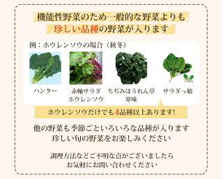 珍しい品種の野菜が沢山