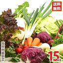 箱根南麓の伊豆の野菜セット 15品目 国産 無農薬 減農薬 機能性野菜 イタリア野菜 食育 ビーガン ヴィーガン ブッダボ…