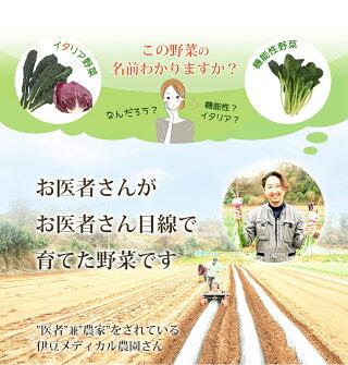 この野菜の名前わかりますか?