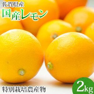 訳あり 佐賀県産 特別栽培 レモン 2kg 国産 マイヤー リスボン クエン酸 ビタミンC 柑橘 人参ジュース