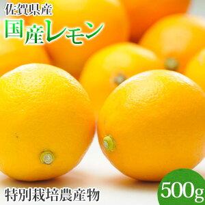 訳あり 佐賀県産 特別栽培 レモン 500g 国産 マイヤー リスボン クエン酸 ビタミンC 柑橘 人参ジュース