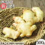 無農薬生姜500g(新)