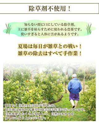 除草剤不使用