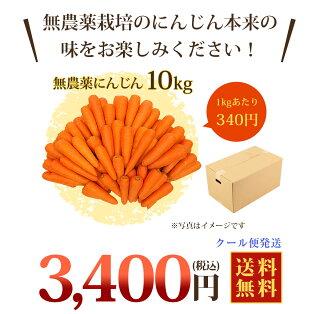 人参10kg送料無料(クール)