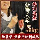 【期間限定】香川県産ワケあり!京野菜の金時人参 5kg【B品】【無農薬・無化学肥料栽培】【お正月】【おせち】【にん…