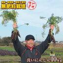 【産地直送】無農薬・無肥料栽培 洗い人参 10kg 茨城県産 送料無料 にんじんジュース 農薬不使用・肥料不使用栽培 自…