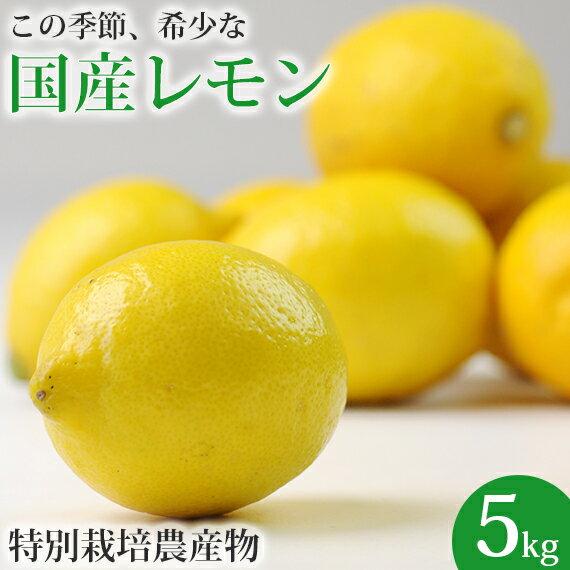 レモンが希少なこの時期に! 国産レモン 5kg 【檸檬】【人参ジュース】 特別栽培農産物 愛媛県産