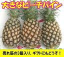 ピーチパイン大玉3〜4個入り石垣島産送料無料【smtb-MS】