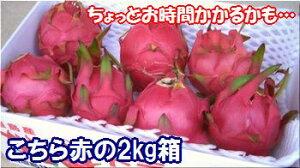 石垣島ドラゴンフルーツ「赤」2kgエコ箱入り(4〜8個入)送料無料【smtb-MS】冷蔵便発送