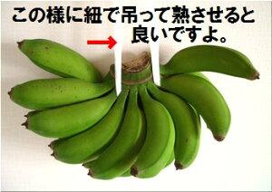 石垣島の島バナナ1〜3房約1,2〜1,5kg前後送料無料【smtb-MS】