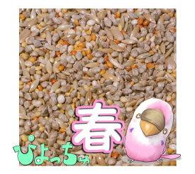 ぴよっちゅ セキセイ春用ブレンド 1kg :  鳥の餌 えさ