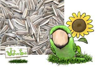 小粒 ひまわりの種 20kg×1 : 鳥の餌 えさ