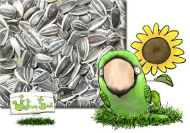 ご注意!丸いタイプの小粒 ひまわりの種 20kg×1 : 鳥の餌 えさ <細長いタイプは1月下旬に入荷予定>
