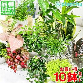 観葉植物 お試しミニ観葉 10種セット 品種おまかせ 3.5号鉢 受け皿付き 育て方説明書付き