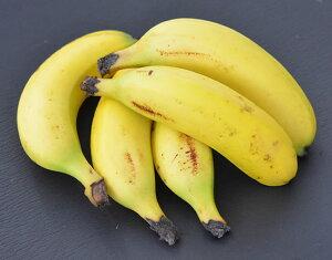 【皮ごと食べられるバナナ】瀬戸内ばなな 5本