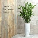 ベンジャミン バロック 陶器鉢植え 水分計のサスティー付き ホワイトアンティーク鉢植え 【AとBの2種類】 ラウンドト…