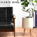 植木鉢 おしゃれ 陶器 室内 陶器鉢 鉢カバー 7号 北欧 おすすめ stem Fiber Cray 底穴無し 観葉植物 脚付き インテリ…
