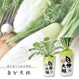 【家庭菜園】GD-391 自分大根 JAN:4528757024712 【聖新陶芸】