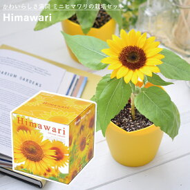 【家庭菜園】GD-753 ミニヒマワリ栽培セット JAN:4528757034988 【聖新陶芸】