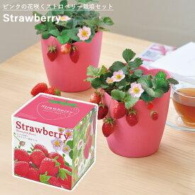 【家庭菜園】GD-796 ピンク花咲くストロベリー栽培セット JAN:4528757036098 【聖新陶芸】