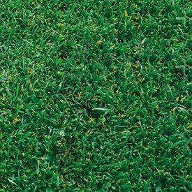 芝 草 種 アベンジャー2 トールフェスク類 種 1kg 多年草 種のみの販売 侵食防止 緑化 法面 種子 紅大 共B 代引不可 個人宅配送不可