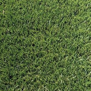 芝 草 種 グランドスラムGLD ペレニアルライグラス類 種 1kg 種のみの販売 侵食防止 緑化 法面 種子 紅大 共B 代引不可 個人宅配送不可