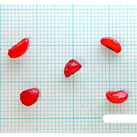 緑化用 草本 トベラ 果肉取 日本産 種 100g 種のみの販売 侵食防止 緑化 法面 種子 紅大 共B 代引不可 個人宅配送不可