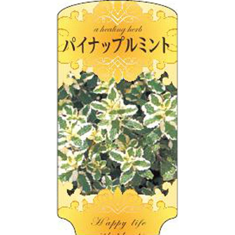 【1000枚】 AC 2型 パイナップルミント MINTO-005 ポリポット用 ラベル 名札 育苗 アンドウケミカル カ施 【代引不可】