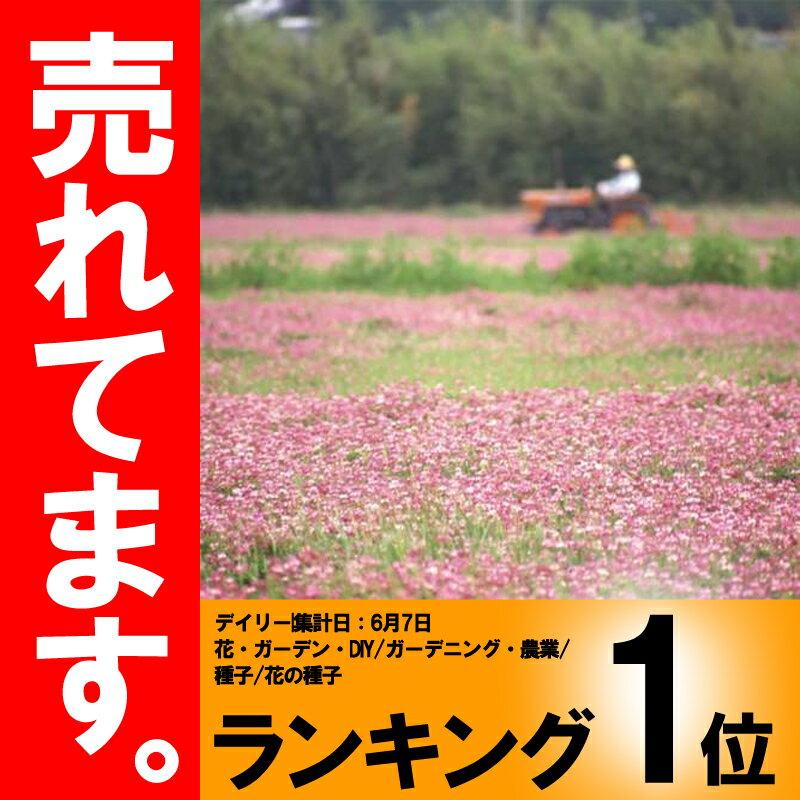 【種 5kg】 レンゲ 景観緑肥 れんげ 蓮花 [播種期:9〜10月] 雪印種苗 米S【代引不可】