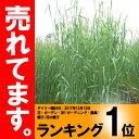 【種 14kg】 ライムギ ライ麦 R-007 中晩生 畑作 緑肥 雪印種苗 米S【代引不可】