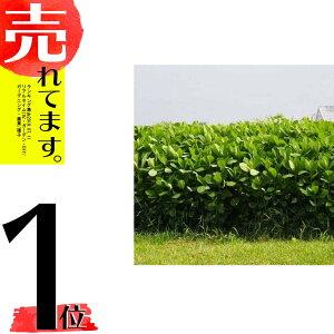 種 5kg クロタラリア ネマックス 畑地 線虫対策 緑肥 [播種期:5〜7月] 雪印種苗 米S 代引不可