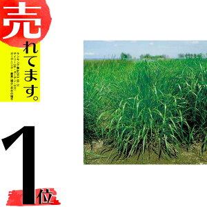 【種 10kg】 ペレニアルライグラス フレンド 晩生 酪農 畜産 [播種期:4〜10月] 雪印種苗 米S【代引不可】