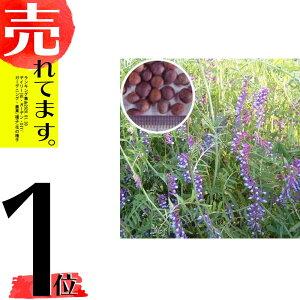 種 10kg まめ助 (ナモイ) ヘアリーベッチ 晩生 緑肥 ミツバチの蜜源に 雪印種苗 植物 米S 代引不可