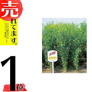 種 10kg クロタラリア ネマコロリ 畑地 線虫対策 緑肥 [播種期:2〜9月] 雪印種苗 米S 代引不可