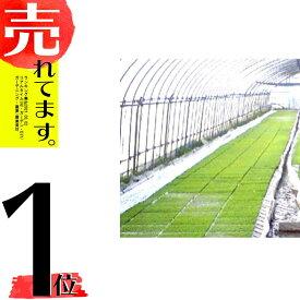 丈夫で長持ち 育苗用 プールシート 厚さ0.26mm×幅 300cm ×長さ 30m プール育苗 シート オK 代引不可