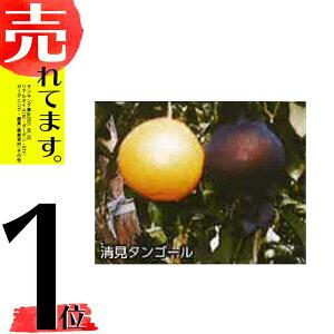 3500枚 果実袋 サンテ S-6 15cm 黒 ミカンの日焼防止・着色促進・樹上越冬など みかん 石川殖産 D