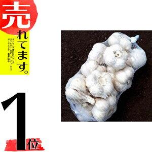 8月上旬出荷予定 10kg 栽培用 ニンニク 青森県産 ホワイト六片 Lサイズ にんにく 球根 種用 米S 代引不可