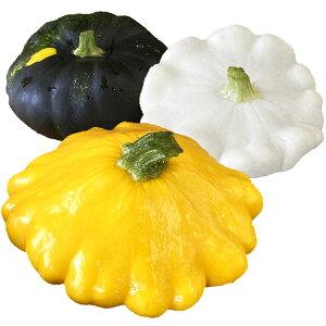 ズッキーニ 2個 UFOズッキーニ 国産 新潟県産 野菜 (大きさは季節や天候によって前後する場合があります) (発送まで1週間程度かかる場合がございます)