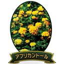 【種 3L】 マリーゴールド アフリカントール 緑肥 景観美化 [播種期:5〜7月] 雪印種苗 米S【代引不可】