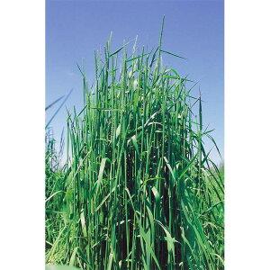 種 5kg チモシー ホライズン 早生 畑地 牧草 緑肥 [播種期:4〜10月] 雪印種苗 米S 代引不可